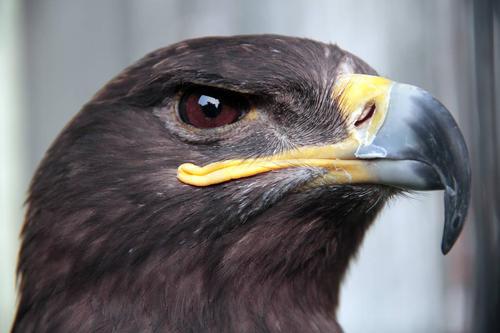 黑鹰官方电棍货到付款